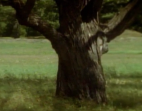 ominous tree